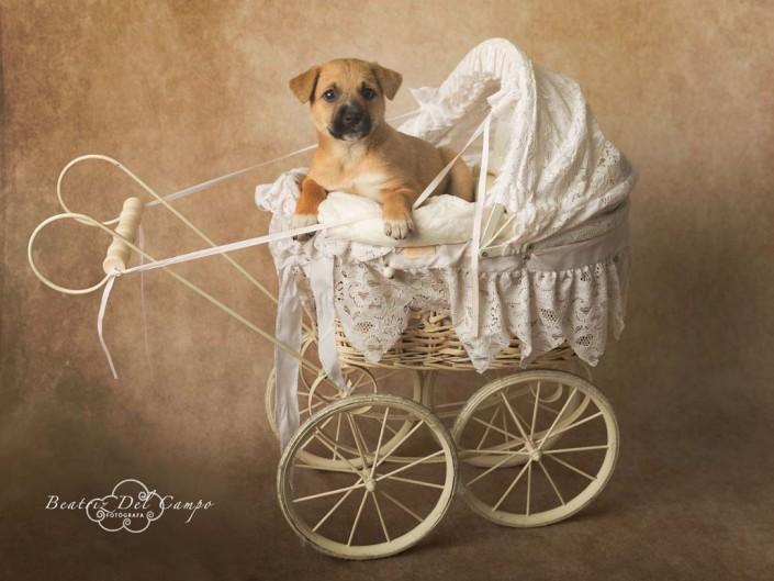 fotografia mascotas fuengirola malaga